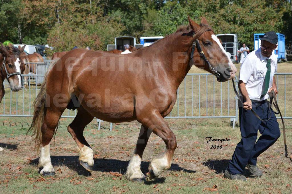 Fête du cheval à GRAULHET le 16 septembre 2018 - Concours Départemental de chevaux de traits - 28