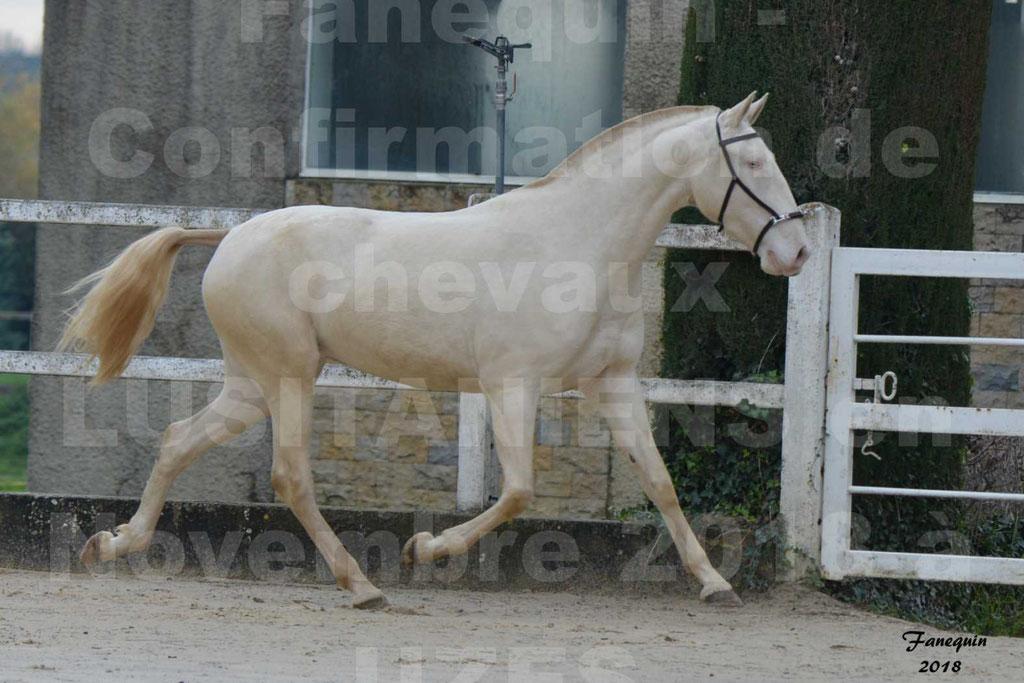 Confirmation de chevaux LUSITANIENS aux Haras d'UZES Novembre 2018 - LOLIBLOU - 33
