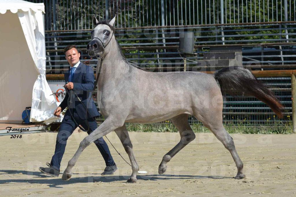 Championnat de FRANCE de chevaux Arabes à Pompadour en 2018 - SANIA DU CAYRON - Notre Sélection - 45