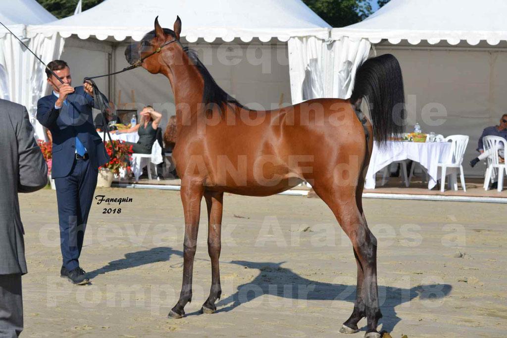 Championnat de FRANCE de chevaux Arabes à Pompadour en 2018 - BO AS ALEXANDRA - Notre Sélection - 43