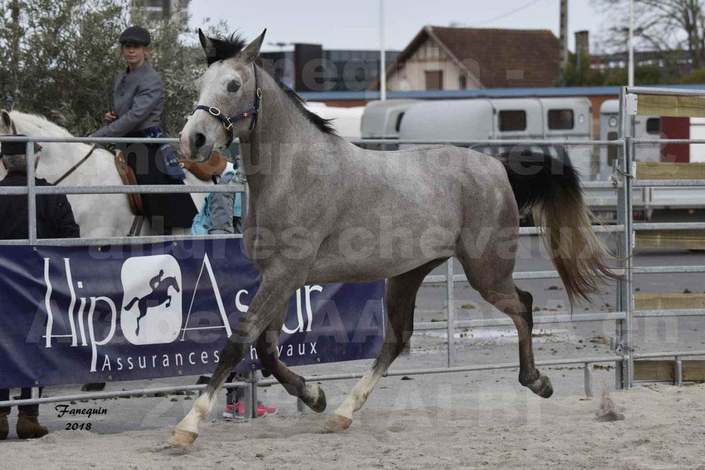 Concours d'élevage de Chevaux Arabes - Demi Sang Arabes - Anglo Arabes - ALBI les 6 & 7 Avril 2018 - FESIHAMKA ARTAGNAN - Notre Sélection - 24