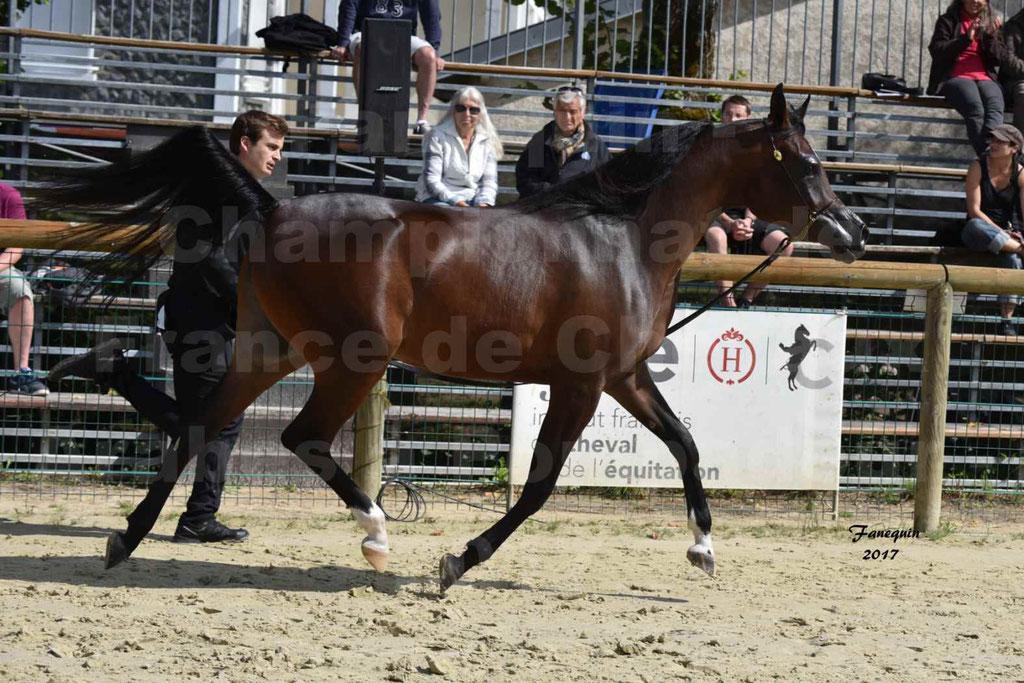 Championnat de France de chevaux Arabes à Pompadour les 19 & 20 Août 2017 - ESMAELIA AL HEVAN - 08