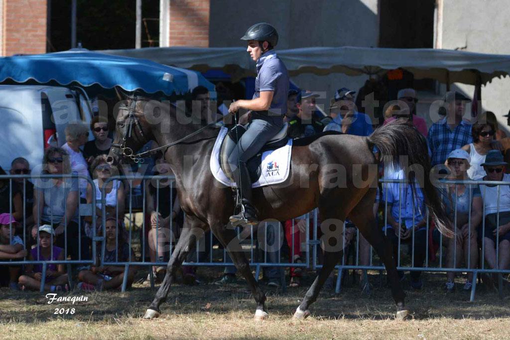 Fête du cheval à GRAULHET le 16 septembre 2018 - Présentation de chevaux Arabe Elevage de GACIA - 04