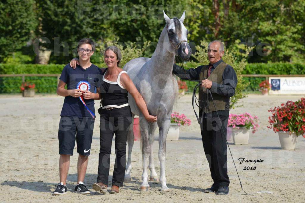 Championnat de FRANCE de chevaux Arabes à Pompadour en 2018 - SH CHAGALL - Notre Sélection - 15