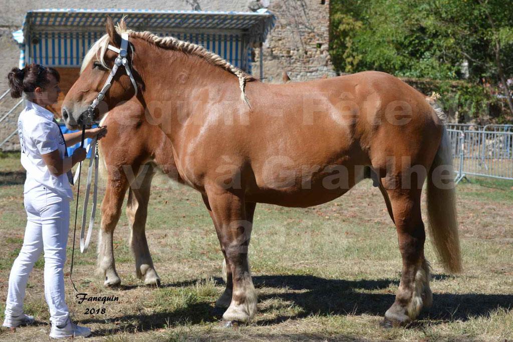 Fête du cheval à GRAULHET le 16 septembre 2018 - Concours Départemental de chevaux de traits - 33