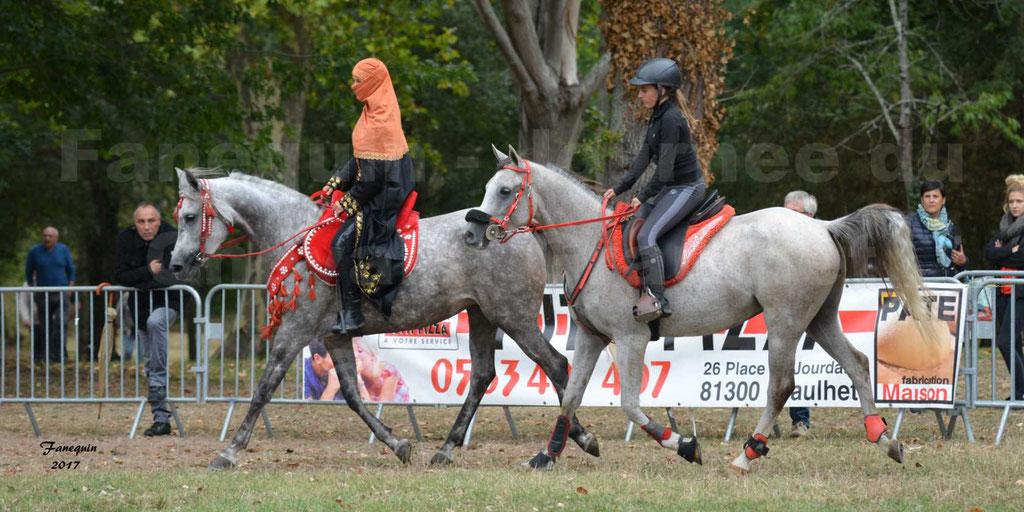 Fête du cheval à GRAULHET le 17 Septembre 2017 - Présentation de chevaux Arabes en main et monté élevage de GACIA - 4