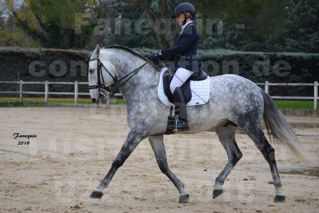 Confirmation de chevaux LUSITANIENS de Novembre 2018 - Étalon - GUSTAVO