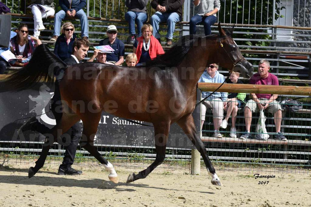 Championnat de France de chevaux Arabes à Pompadour les 19 & 20 Août 2017 - ESMAELIA AL HEVAN - 07