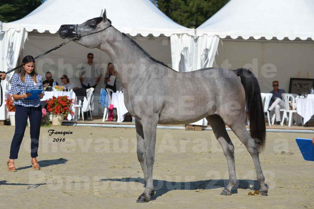 Championnat de FRANCE de chevaux Arabes à Pompadour en 2018 - SANIA DU CAYRON - Notre Sélection - 47