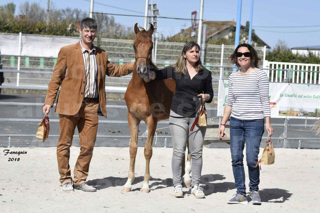 Concours d'élevage de Chevaux Arabes - Demi Sang Arabes - Anglo Arabes - ALBI les 6 & 7 Avril 2018 - MARCUS DE LAFON - Notre Sélection - 6