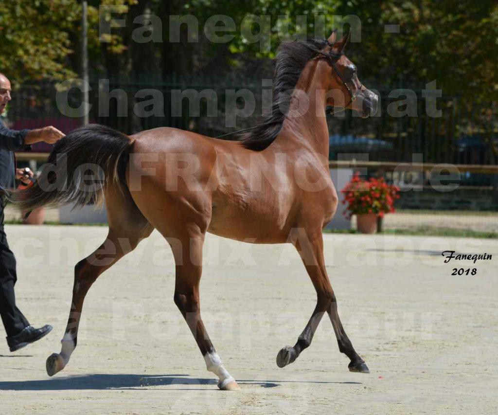 Championnat de FRANCE des chevaux Arabes à Pompadour en 2018 - SH CHARISMA - Notre Sélection - 31