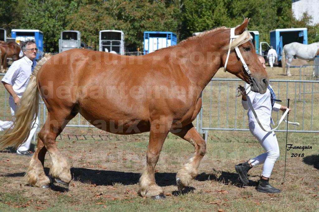 Concours départemental de chevaux de traits à GRAULHET en 2018 - Elevage POUJADE - Notre Sélection - 17