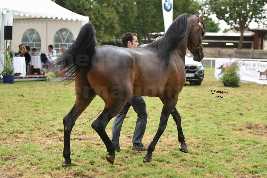 International Arabian Horse Show B de VICHY 2016 - MILLIAR - Notre Sélection - 16