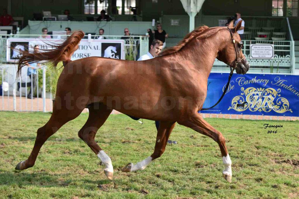 International Arabian Horse Show B de VICHY 2016 - DZHARI NUNKI - Notre Sélection - 20