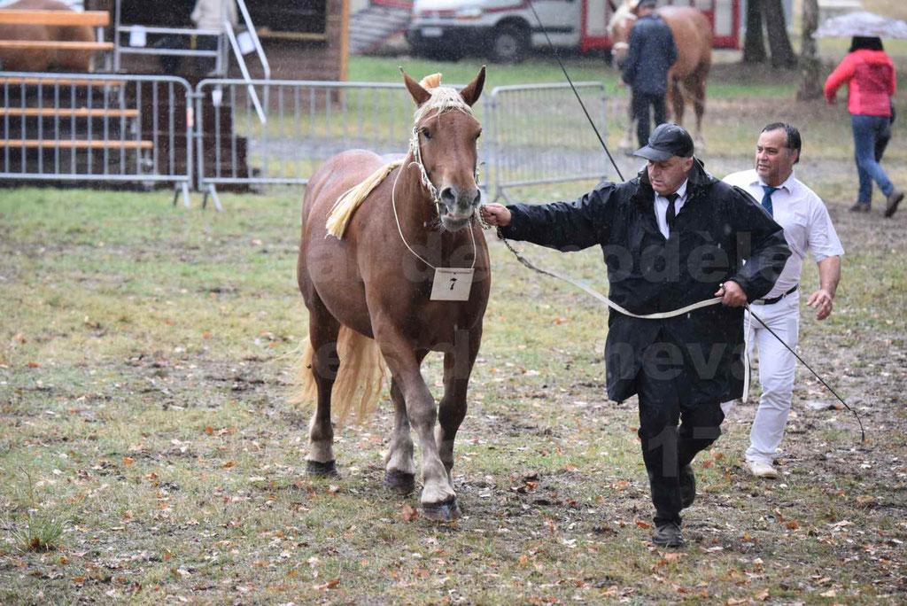 Concours Régional de chevaux de traits en 2017 - Trait COMTOIS - FANNY 61 - 11