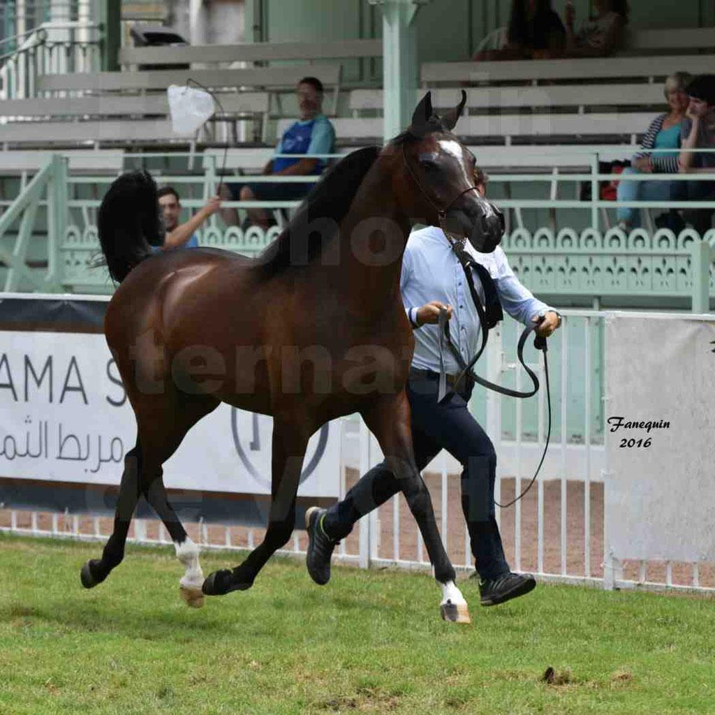 International Arabian Horse Show B de VICHY 2016 - ESMAELIA AL HEVAN - Notre Sélection - 04