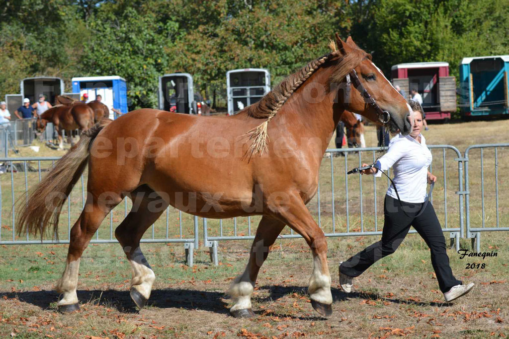 Concours départemental de chevaux de traits à GRAULHET en 2018 - Marjorie DEFRANCE - Notre Sélection - 3