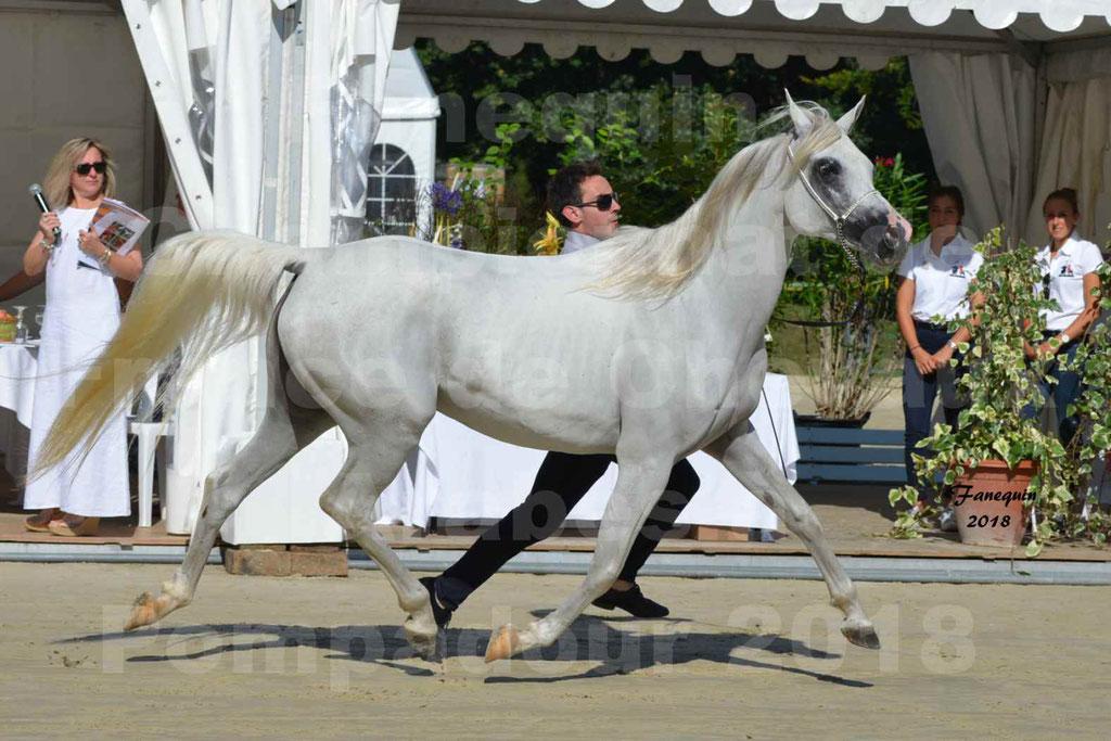 Championnat de FRANCE de chevaux Arabes à Pompadour en 2018 - ESTALIA - 14