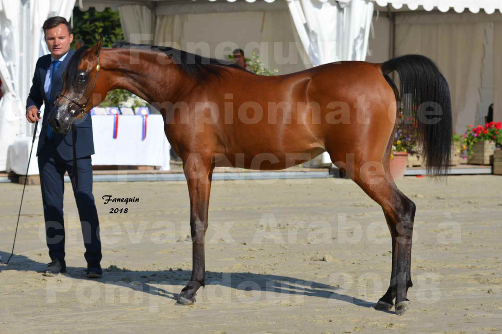 Championnat de FRANCE de chevaux Arabes à Pompadour en 2018 - BO AS ALEXANDRA - Notre Sélection - 47