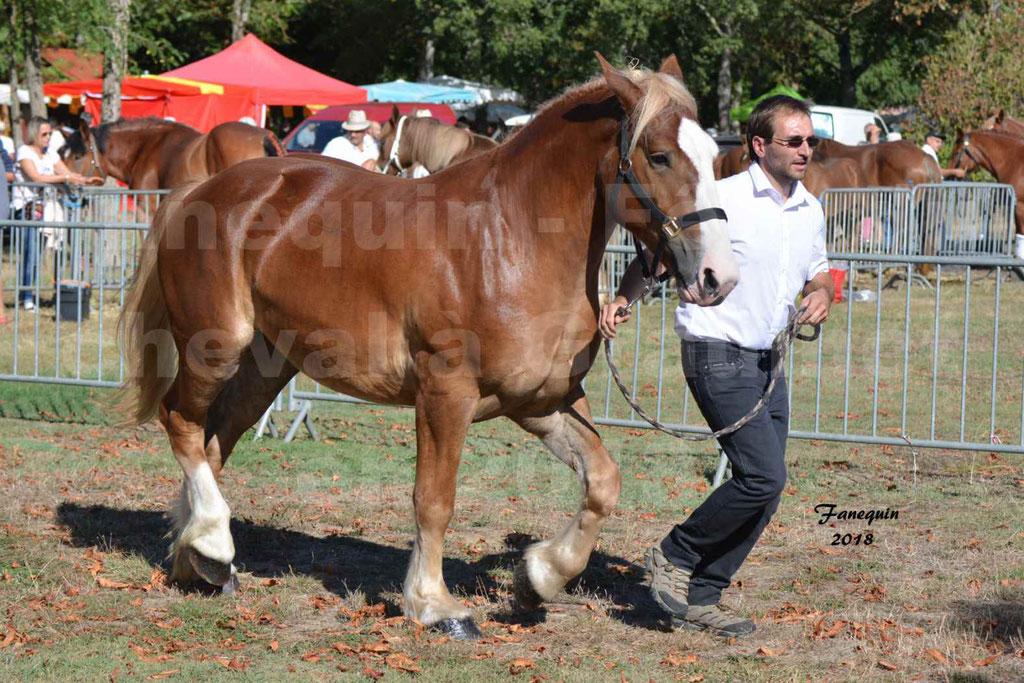 Fête du cheval à GRAULHET le 16 septembre 2018 - Concours Départemental de chevaux de traits - 01