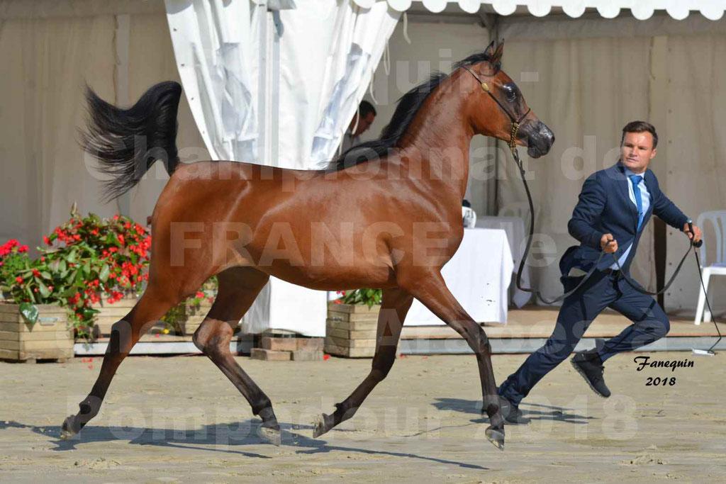 Championnat de FRANCE de chevaux Arabes à Pompadour en 2018 - BO AS ALEXANDRA - Notre Sélection - 32