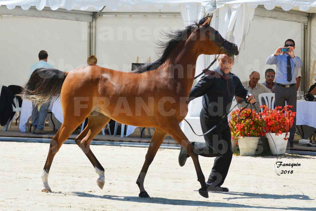 Championnat de FRANCE des chevaux Arabes à Pompadour en 2018 - SH CHARISMA - Notre Sélection - 12