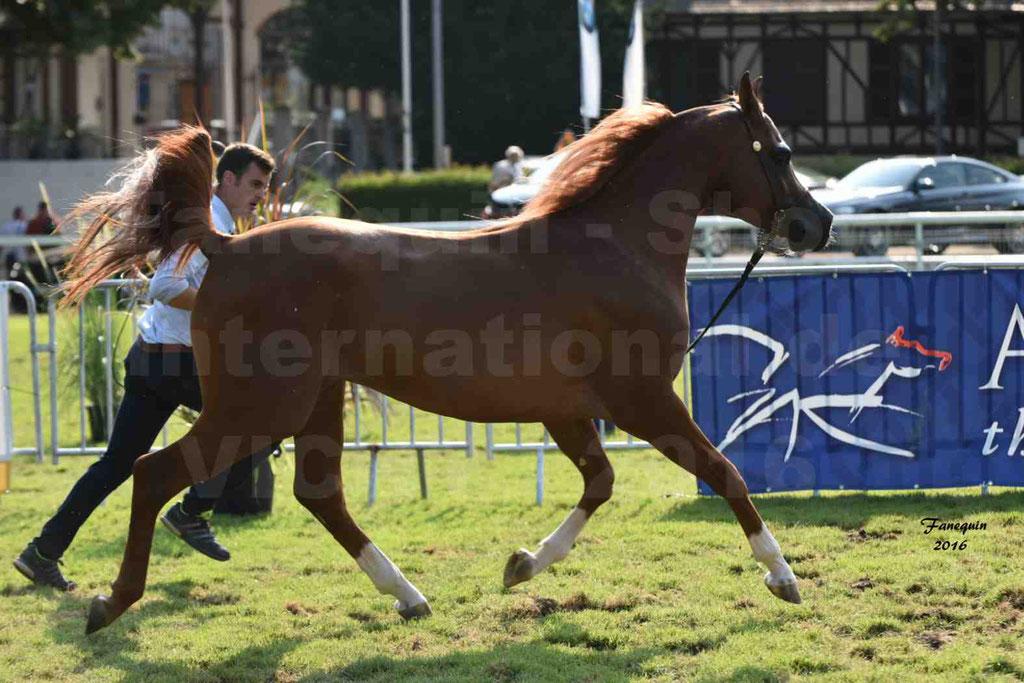 International Arabian Horse Show B de VICHY 2016 - DZHARI NUNKI - Notre Sélection - 36