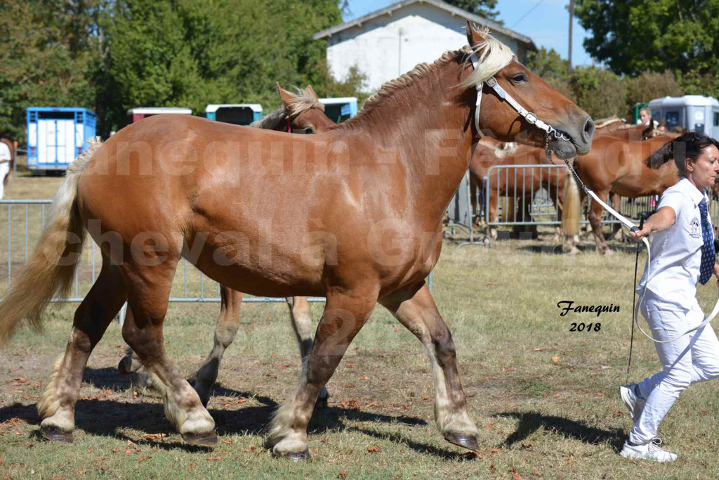 Fête du cheval à GRAULHET le 16 septembre 2018 - Concours Départemental de chevaux de traits - 35
