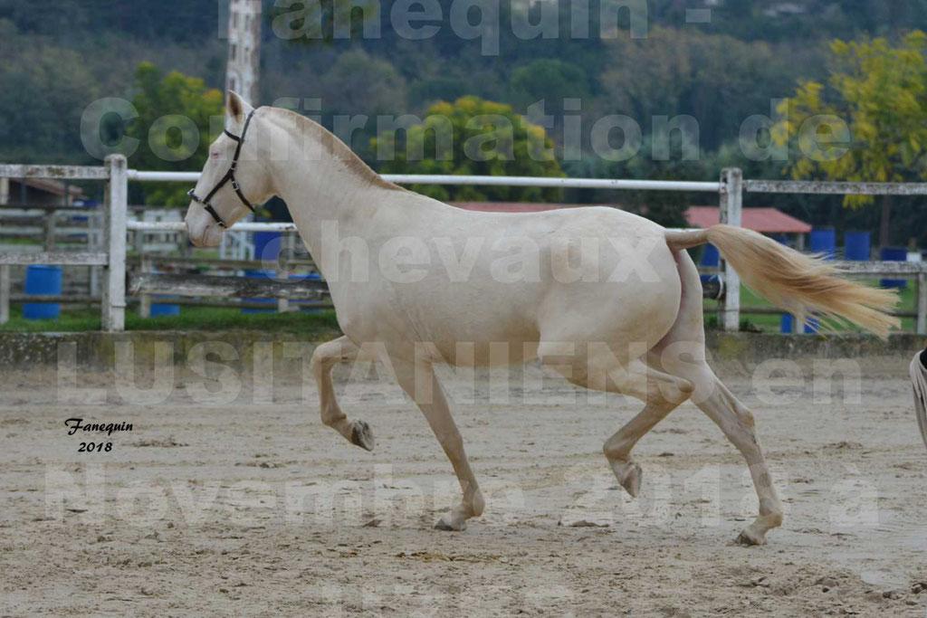 Confirmation de chevaux LUSITANIENS aux Haras d'UZES Novembre 2018 - LOLIBLOU - 07
