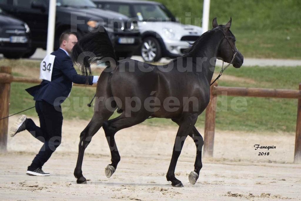 Concours Européen de chevaux Arabes à Chazey sur Ain 2018 - SDL MAGIC NIGHT STONE - Notre Sélection - 12