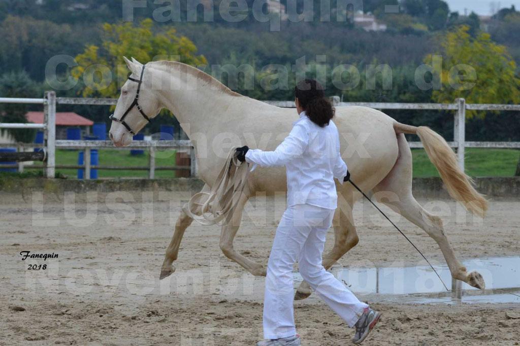 Confirmation de chevaux LUSITANIENS aux Haras d'UZES Novembre 2018 - LOLIBLOU - 06