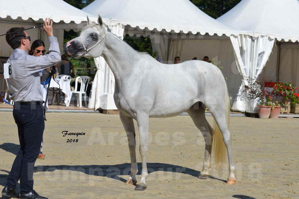 Championnat de FRANCE de chevaux Arabes à Pompadour en 2018 - ESTALIA - 34