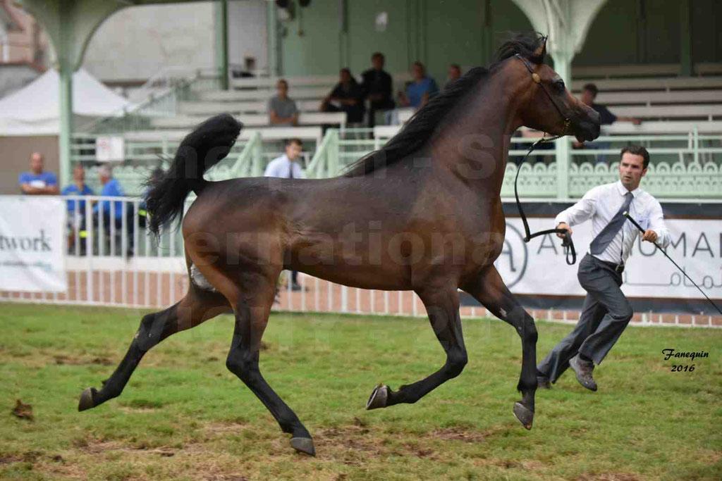 International Arabian Horse Show B de VICHY 2016 - MILLIAR - Notre Sélection - 17