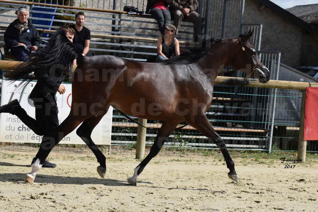 Championnat de France de chevaux Arabes à Pompadour les 19 & 20 Août 2017 - ESMAELIA AL HEVAN - 09