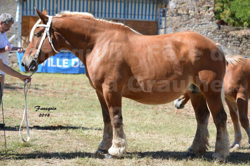 Fête du cheval à GRAULHET le 16 septembre 2018 - Concours Départemental de chevaux de traits - 43