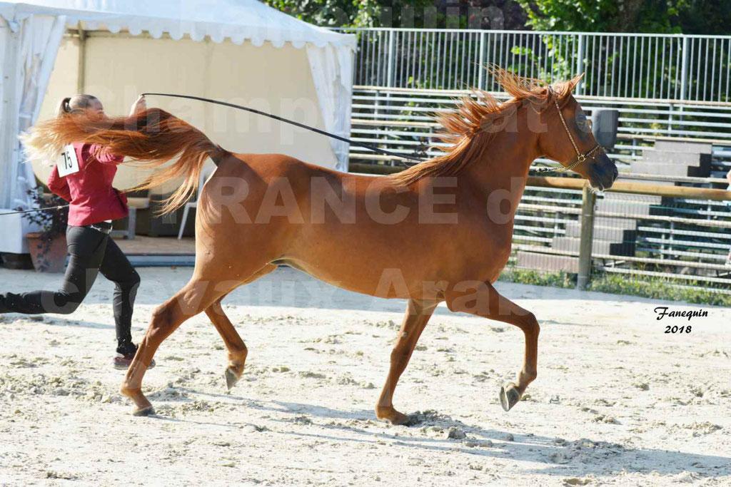 Championnat de FRANCE de chevaux Arabes à Pompadour 2018 - MAAMAR ISHANE - Notre Sélection - 08