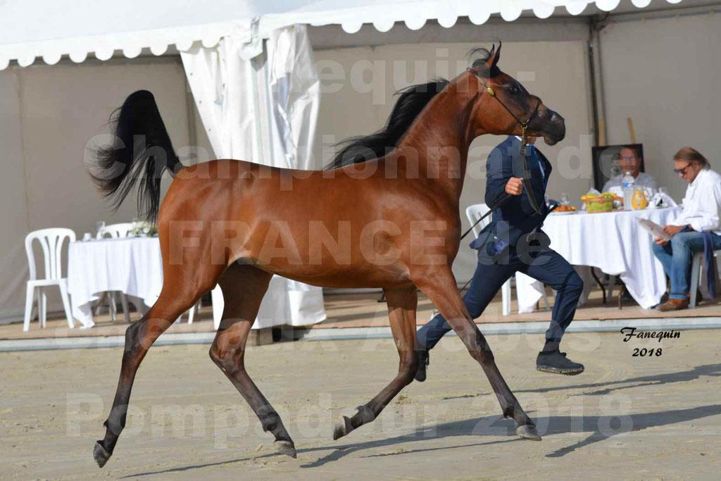 Championnat de FRANCE de chevaux Arabes à Pompadour en 2018 - BO AS ALEXANDRA - Notre Sélection - 16