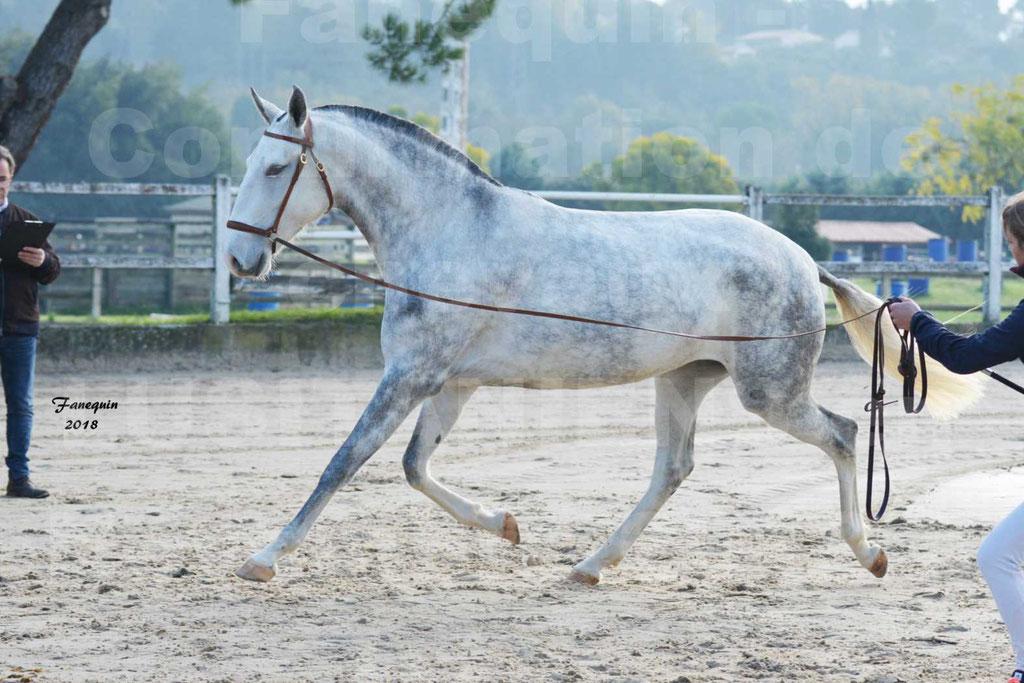 Confirmation de chevaux LUSITANIENS aux Haras d'UZES Novembre 2018 - LUTECE DU CASTEL - 06