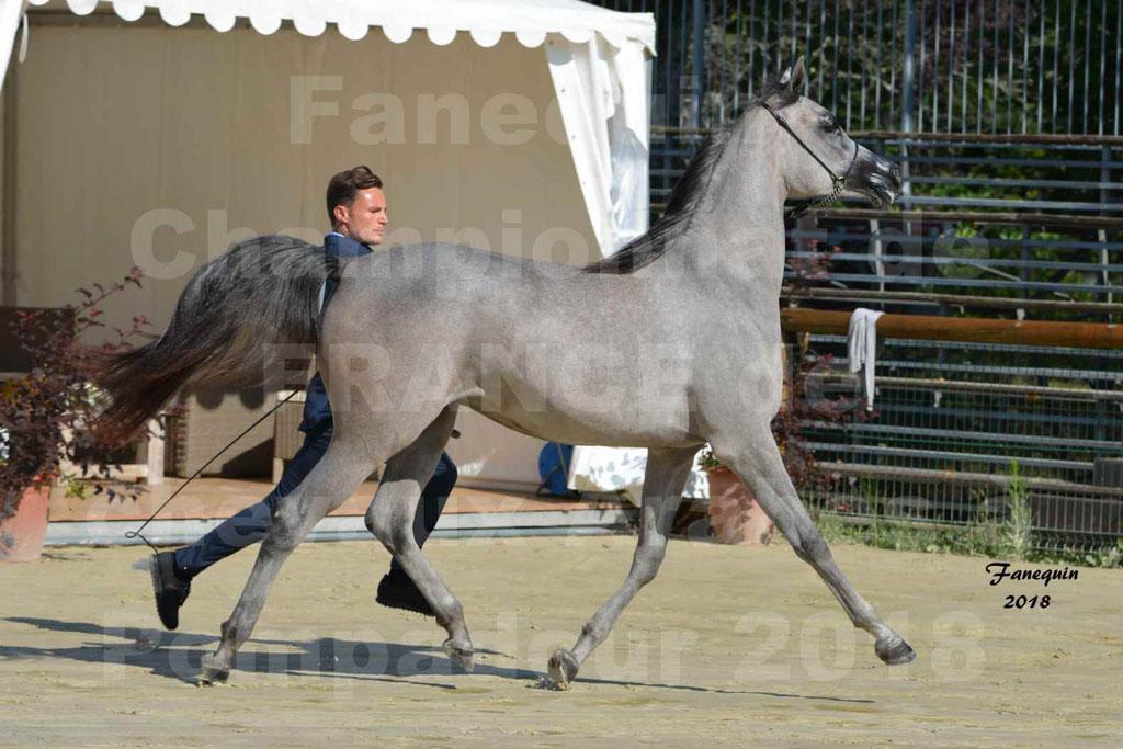 Championnat de FRANCE de chevaux Arabes à Pompadour en 2018 - SANIA DU CAYRON - Notre Sélection - 32