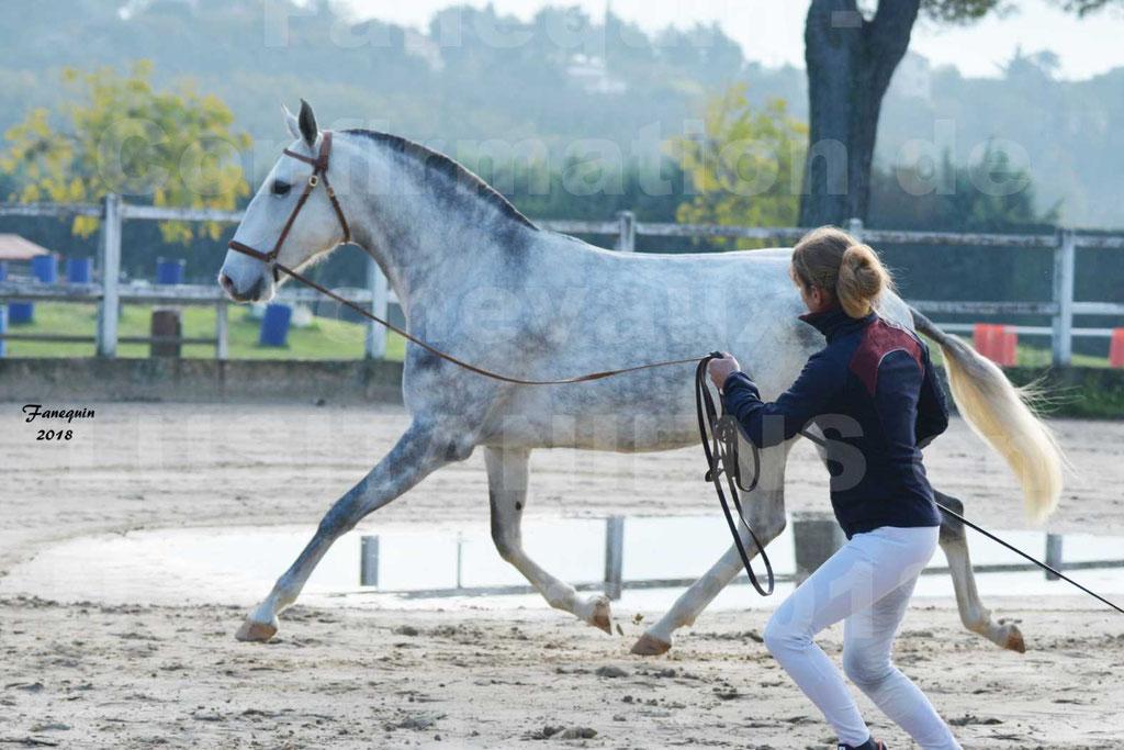 Confirmation de chevaux LUSITANIENS aux Haras d'UZES Novembre 2018 - LUTECE DU CASTEL - 05