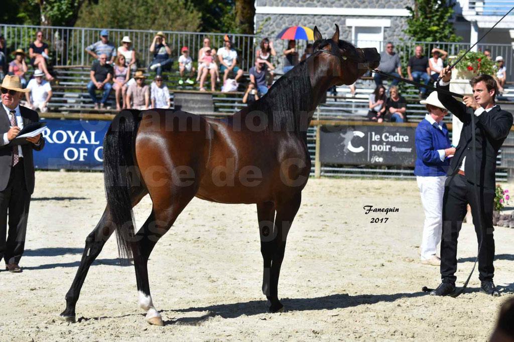 Championnat de France de chevaux Arabes à Pompadour les 19 & 20 Août 2017 - ESMAELIA AL HEVAN - 06