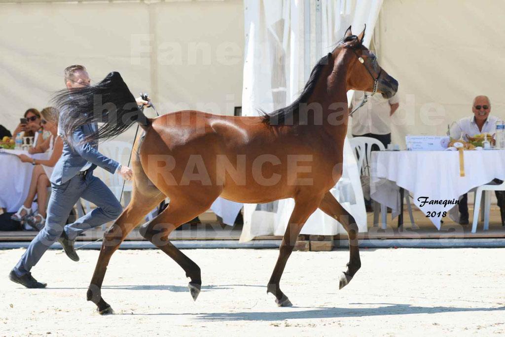 Championnat de FRANCE de chevaux Arabes à Pompadour en 2018 - BO AS ALEXANDRA - Notre Sélection - 03