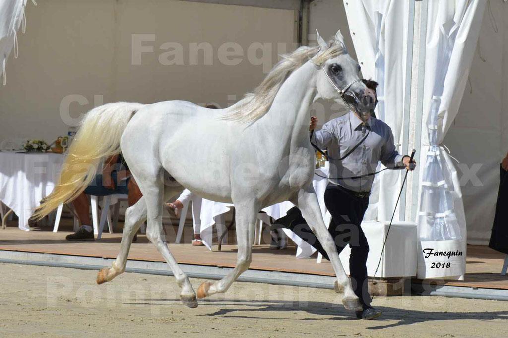 Championnat de FRANCE de chevaux Arabes à Pompadour en 2018 - ESTALIA - 07