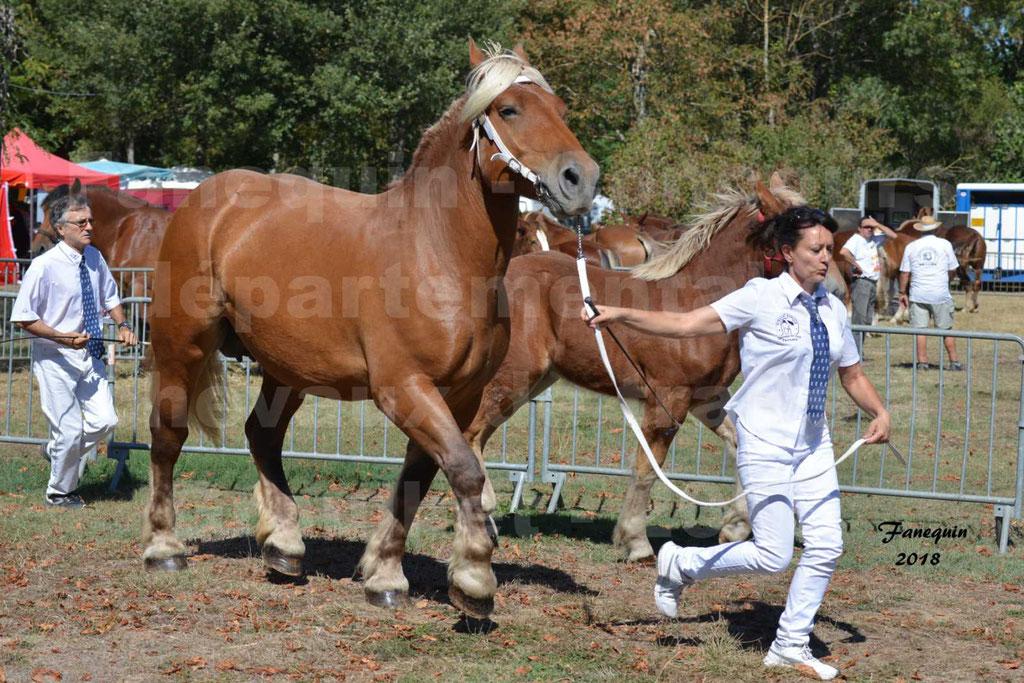Concours départemental de chevaux de traits à GRAULHET en 2018 - Elevage POUJADE - Notre Sélection - 11