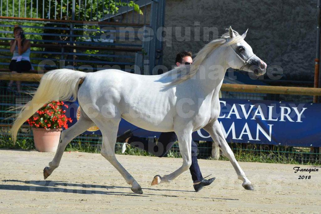 Championnat de FRANCE de chevaux Arabes à Pompadour en 2018 - ESTALIA - 22