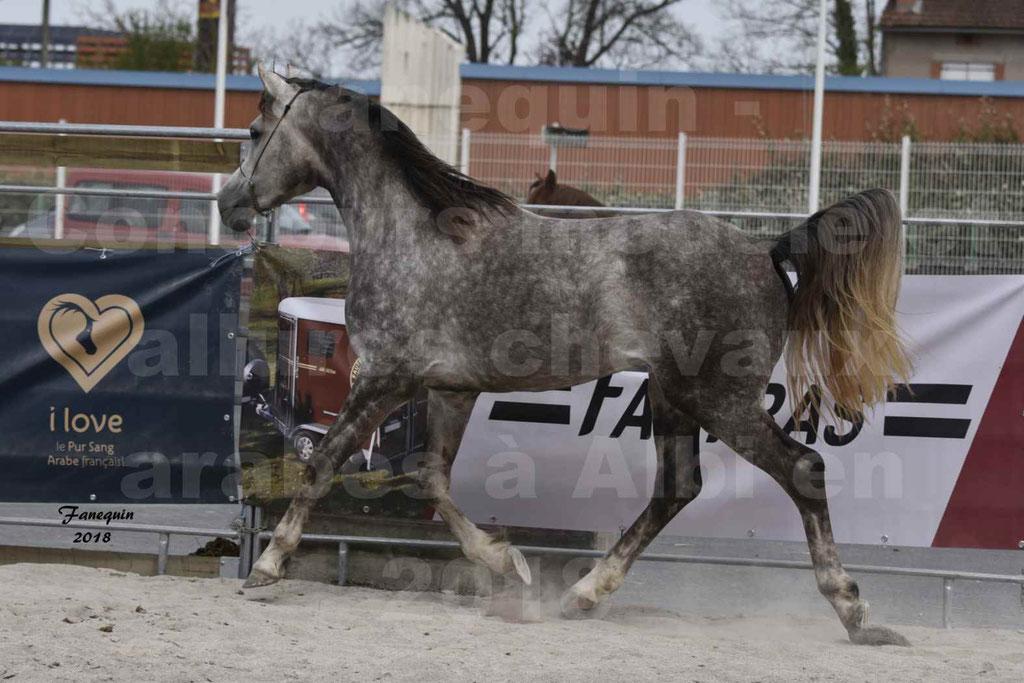 Concours d'élevage de Chevaux Arabes - Demi Sang Arabes - Anglo Arabes - ALBI les 6 & 7 Avril 2018 - PERCEVAL DE LAFON - Notre Sélection - 10