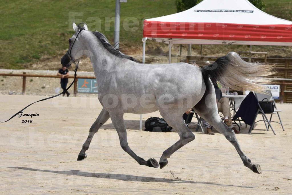 Concours Européen de chevaux Arabes à Chazey sur Ain 2018 - FATIN ALBIDAYER - Notre Sélection - 12