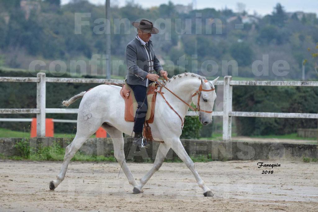 Confirmation de chevaux LUSITANIENS de Novembre 2018 - Étalon - DON QUICHOTTE DU MOLE