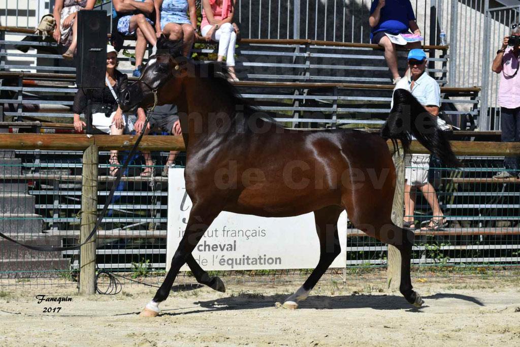 Championnat de France de chevaux Arabes à Pompadour les 19 & 20 Août 2017 - ESMAELIA AL HEVAN - 02