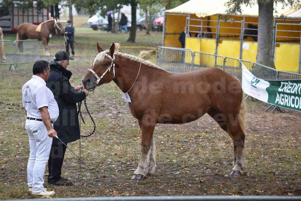 Concours Régional de chevaux de traits en 2017 - Trait COMTOIS - FANNY 61 - 02